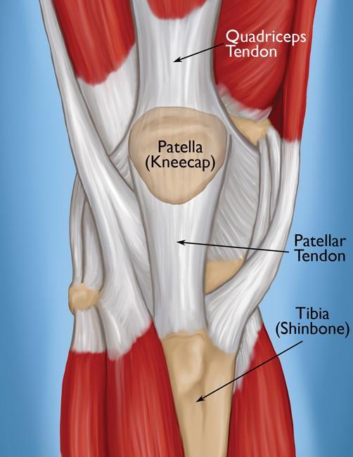 Relaciones estructura-función en tendones: una revisión